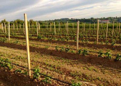 Vierkant-Pfähle aus Robinien-Holz auf einem Feld