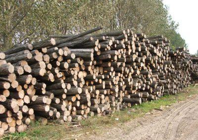 Robinien Holz Stämme mit Rinde